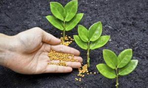fertilizantes y abonos
