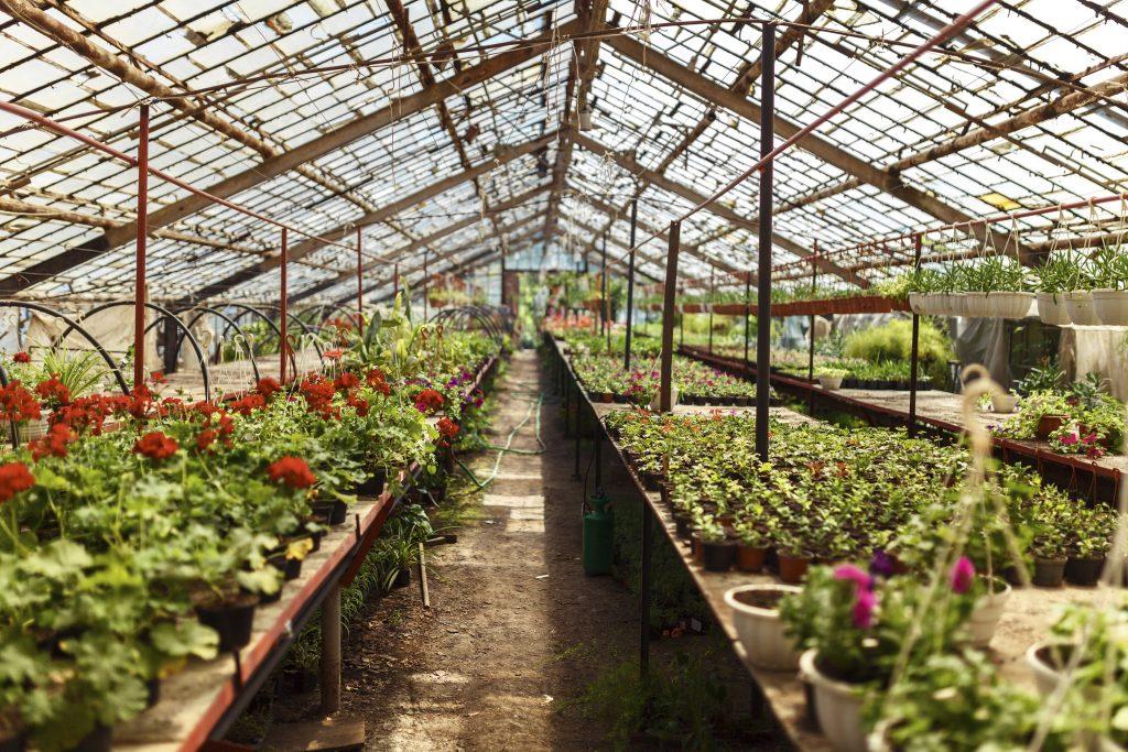C mo hacer un invernadero casero jardinedia - Fabricar un invernadero ...