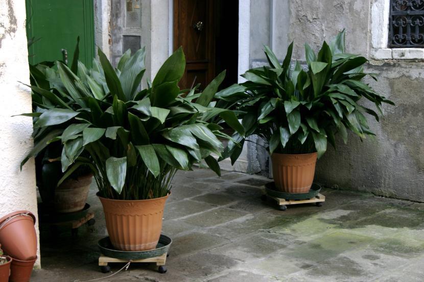 Plantas de interior que necesitan poca luz nombres e - Plantas de interior que no necesitan luz ...