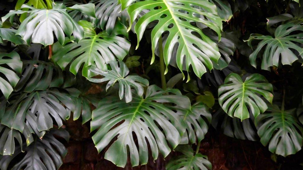 Plantas de interior que necesitan poca luz nombres e for Plantas de interior para poca luz